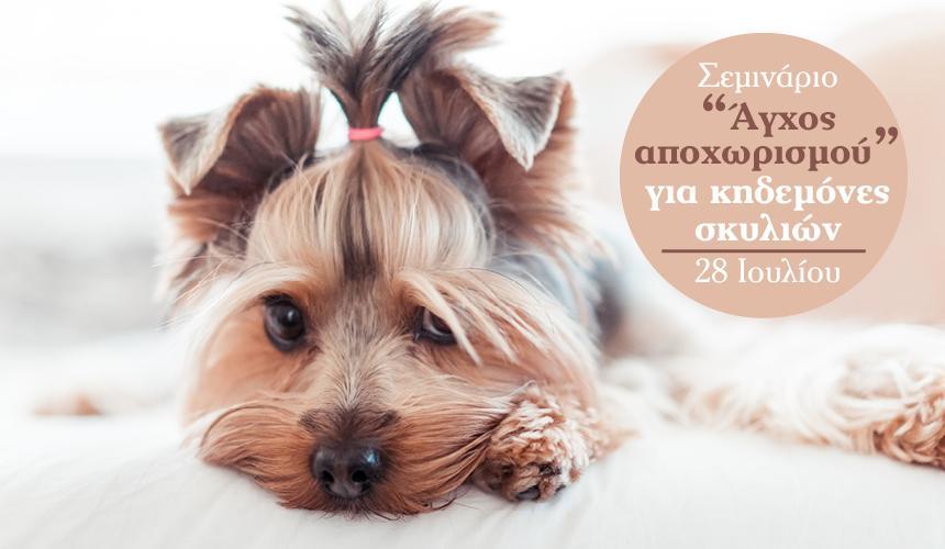 """Σεμινάριο """"Άγχος αποχωρισμού"""" για κηδεμόνες σκυλιών"""