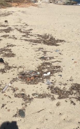 Καθαρισμός παραλίας Ρακοποτάμου στη Λάρισα